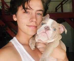 cole sprouse, dog, and boy image
