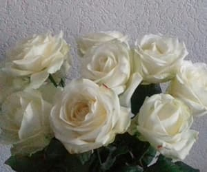 pictures, white roses, and roses image