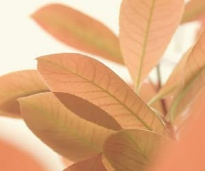 peach, aesethic, and colorgala image