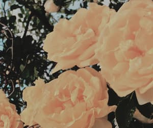aesthetic, header, and flowers image