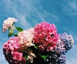 flowers, indie, and spring image
