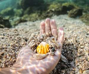 deniz image