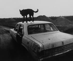 car, black and white, and wolf image