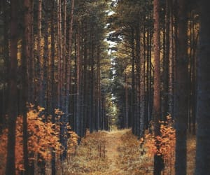 forest, autumn, and nature image