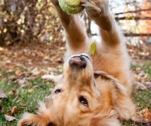 dog, animal, and ball image