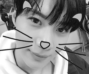 black and white, cat, and SHINee image