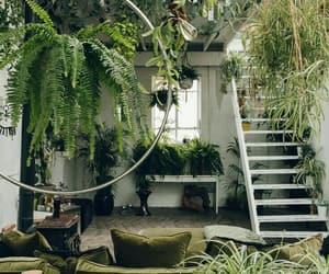 plants, interior, and design image