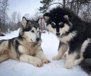animals, snow, and fluffy image