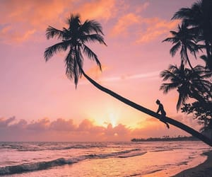 orange, palm tree, and pink image