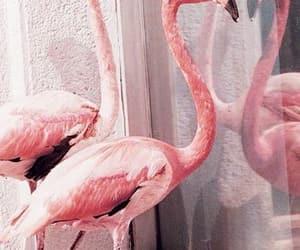 aesthetic, bird, and animal image