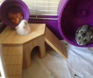 carrots, dwarf hamster, and hamster image
