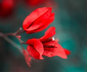 beautiful, power, and red flower image