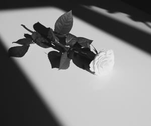 black and white, Darkness, and flower image