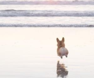 dog, beach, and corgi image