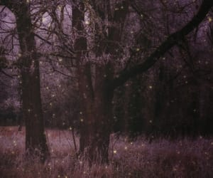 fairytale, forest, and soft image