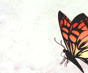 gif, shakespeare, and butterfly gif image