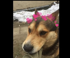 dog, hearts, and puppy image