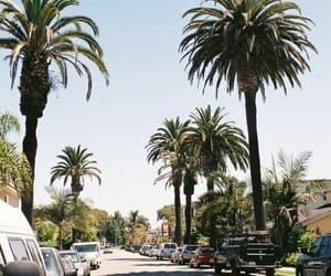 california, palms, and sun image