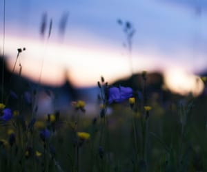 field, flowers, and sunset image