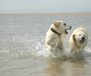 aww, dogs, and play image