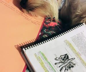 dog, medicine, and study image