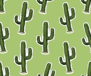 cactus, wallpapers, and wallpaper image