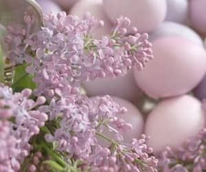 easter, spring, and flowers image