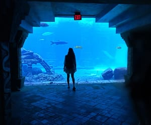 aquarium, atlantis, and bahamas image