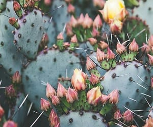 cactus, flores, and nature image