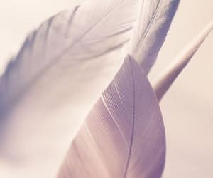 feather, background, and wallpaper image