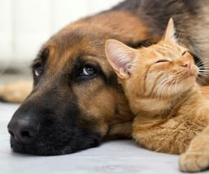 cats, dogs, and animals image