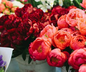 flowers, red, and peonies image