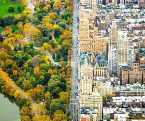 Central Park, city, and nyc image