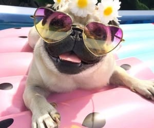 pug, dog, and summer image