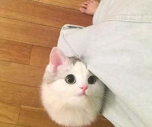 cat, cute, and small image