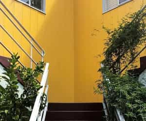 aesthetic, garden, and yellow image