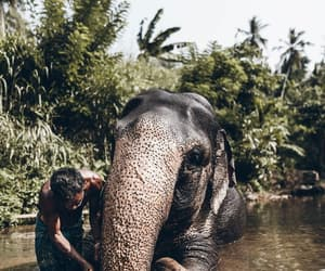nature, Sri Lanka, and great pic image
