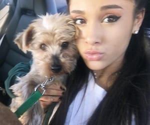 dog puppy, icon, and ariana grande image