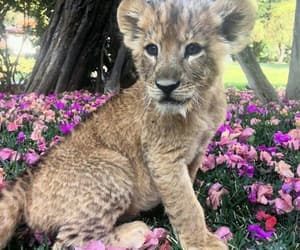 animal, wild life, and animals image