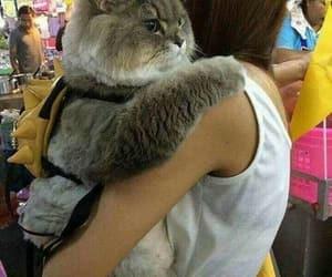 big cat, kawaii, and cat image