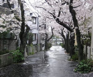japan, tree, and sakura image