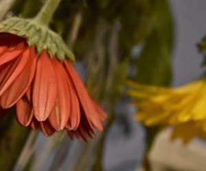 flower, plants, and wilting image