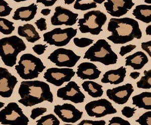 animal, brown, and leopard print image
