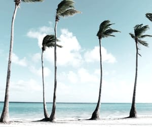 beach and palm tree image