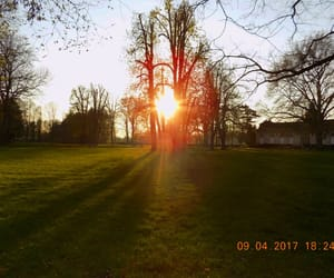 park, sun, and tree image