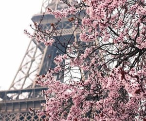 cherry blossom, spring, and travel image