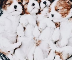 adorable, puppies, and cute image