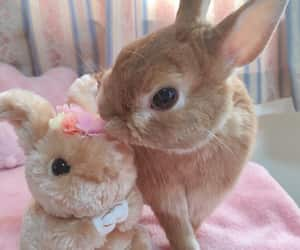 bunny, doll, and flower image