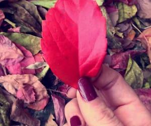 autunno, bellezza, and natura image