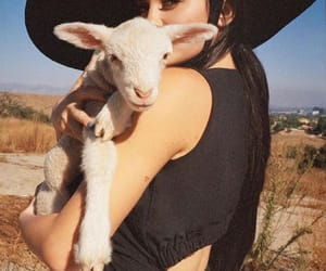 animals, lamb, and kylie jenner image